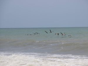 Palomino et sa belle plage
