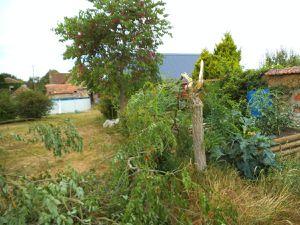 un arbre en moins dans le jardin