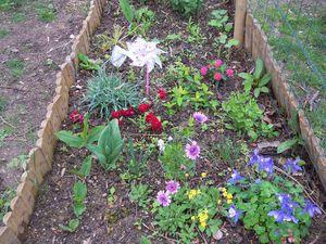 les premiers bouquets du printemps font leur apparition dans la cuisine
