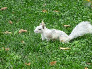 Des petits écureuils pas farouches.....