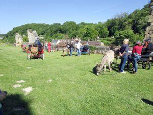 Les ânes au château de Lavardin