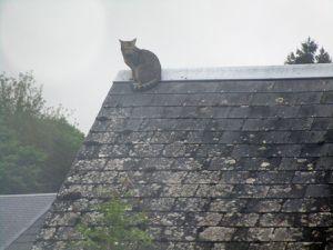 Le chat sur le toit !