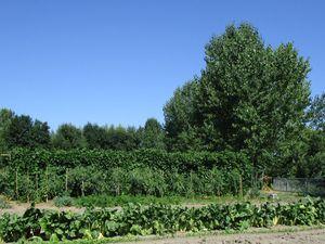 Du jardin partagé à La Chartre à l'étang de la Coudraie à Ruillé