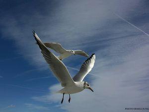 Irmeli Jung, les vagues de la Baie des Anges