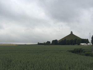 Loup à Waterloo aujourd'hui!