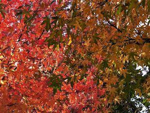 Ocres d'automne ...
