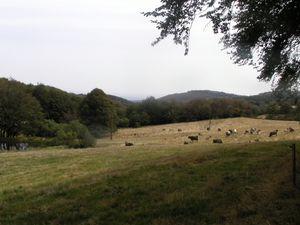 Prairies calmes, la force douce des ruminants nous accompagnait aussi.
