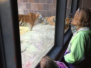 sortie Zoo