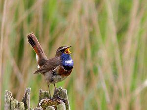 La baie de Somme, royaume de la lumière et des oiseaux