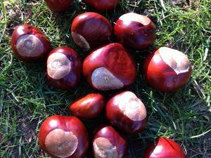 Un dimanche d'automne à ramasser des marrons !