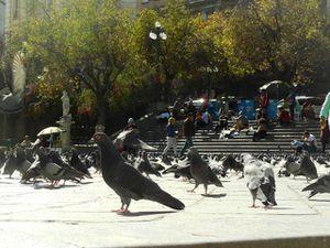 La place Murillo, ses pigeons ...