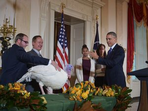 Thanksgiving in America: turkey forgiving