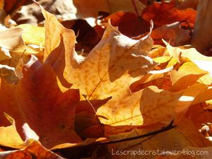 52 photos 2015 - Automne