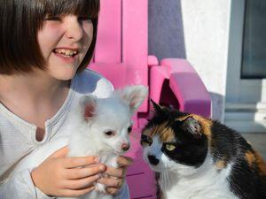 Cette mini Miss s'appelle Mahory et est une Chihuahua à poils longs :))) Appelez moi Paris Hilton maintenant ok?! :)))