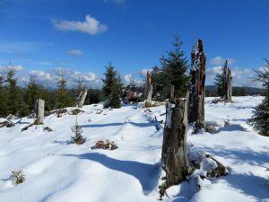L'hiver est encore bien présent sur le plateau du Haut Rognol