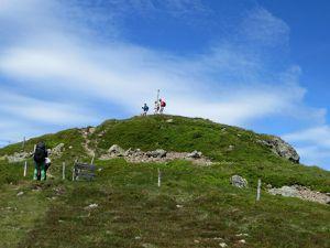 Pulsatille de printemps sur les pentes du Rothenbachkopf (alt. 1316 m)