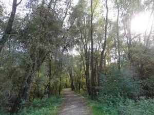 Bouchemaine, Lac de Maine, Berges de Maine, Les arbres au bord de l'eau, Cl. Elisabeth Poulain