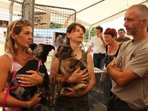 Stand du chien berger d'Auvergne. Rencontres, discussions. Patients, les jeunes chiens ont démontré toute la journée auprès des visiteurs le caractère amical du berger d'Auvergne.