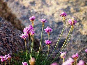 Le fleurs de la region des Côtes-d'Armor