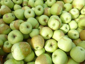 La cueillette des pommes golden perturbée