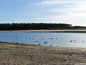 Dans l'estuaire du Payré à Talmont Saint-Hilaire