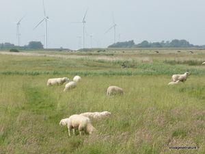 Paysages de polders