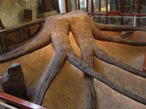 Une simple racine morte fossilisée?