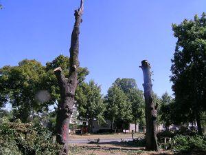 L'avenue du château avant et après les abattages des tilleuls centenaires