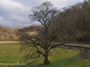 Le même arbre pris avec et sans flash! (clic sur l'arbre pour agrandir)