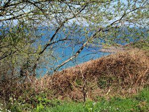 Côte du Goëlo au printemps