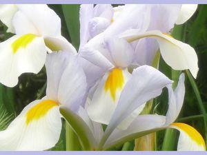 fleurs du mois de mai