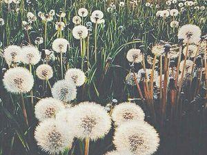 {Inspiration} Spring inspiration tumblr
