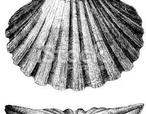L'astrolabe GoT , ou sphere de Dyson?  Le logo de la NASA ressemble aussi a une sphère de Dyson stylisée ...  Le Dalaï Lama et son ami l'alpiniste nazi ss H.Harrer dont la vie et le livre 7 ans d'aventures inspirèrent le film éponyme de JJ.Anaud avec Brad Pitt, l'acteur bisexuel accro aux stéroïde.  ( Ça sent le syndrome MK-Ultra à plein nez!)  La forme des hélices de la sphère de Dyson rappelle celle de la coquille de Saint Jacques...vue de profil.La symbolique de la maçonnerie mystique cacherait le savoir de l'utilisation des portes dimensionnelles et de la communication avec les faux dieux.Le tatouage du héros du film Le retour de la momie est une pyramide à l'oeil unique avec un globe solaire entouré de deux cobras (serpent royal) couronnés.