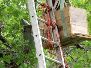 Récupération extrême d 'un essaim  par mr Lamgbourg claude apiculteur et acrobate