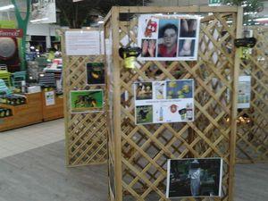 Exposition sur le frelon asiatique à Jardiland  de villenave d'ornon