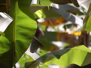 Cuba - Parc national de la Vallée de Viñales
