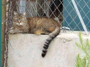 Hebdo est un beau chat calme et plutôt sédentaire
