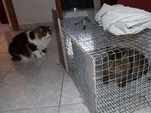 L'arrivée, sous l'œil attentif de Bella et la découverte du confort.