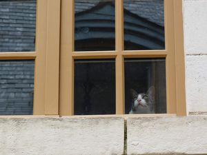 Les chats de Blois