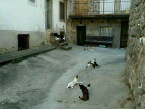 Gabrielle et Witmark ainsi que la rue des chats.