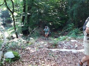 Cheminement dans la forêt.