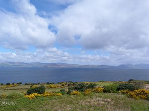 Les paysages du Kerry avec au loin la péninsule de Dingle et les ajoncs qui poussent partout.