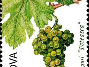Raisins, vins et vignobles