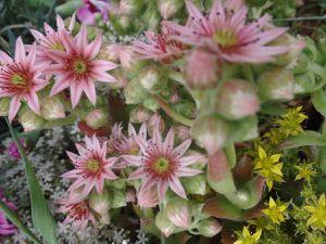 ces petites fleurs sont magnifique !!!