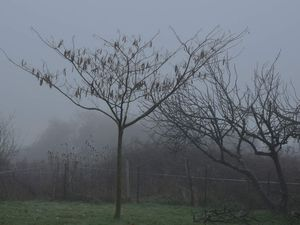 Arbres et brouillard....