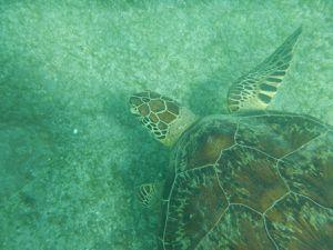 la plage de ngouja, sud de Mayotte