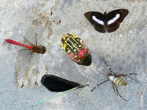 La campagne est pleine de fleurs aux couleurs vives et les insectes s'y retrouvent en abondance
