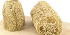 The loofah is a squash that is dried and used to exfoliate the skin.
