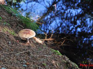 quelques champignons sur le chemin.