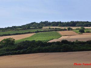 Le relief à changé, nous apercevons des vignes.
